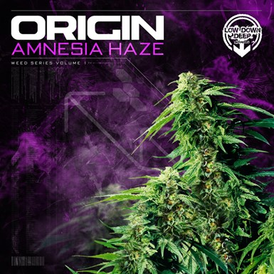 Amnesia Haze artwork
